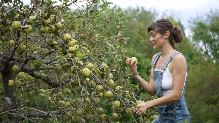 After the Fall Cider combines family tradition and art