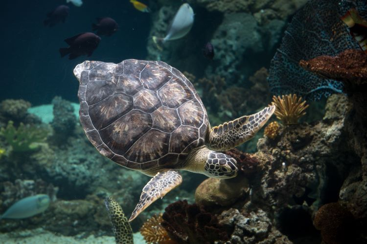 Sea turtles aren't native to Pittsburgh, so why are they here?